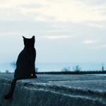 青島は本当に「猫の楽園」なのか?本当の「ネコの楽園」はここ!